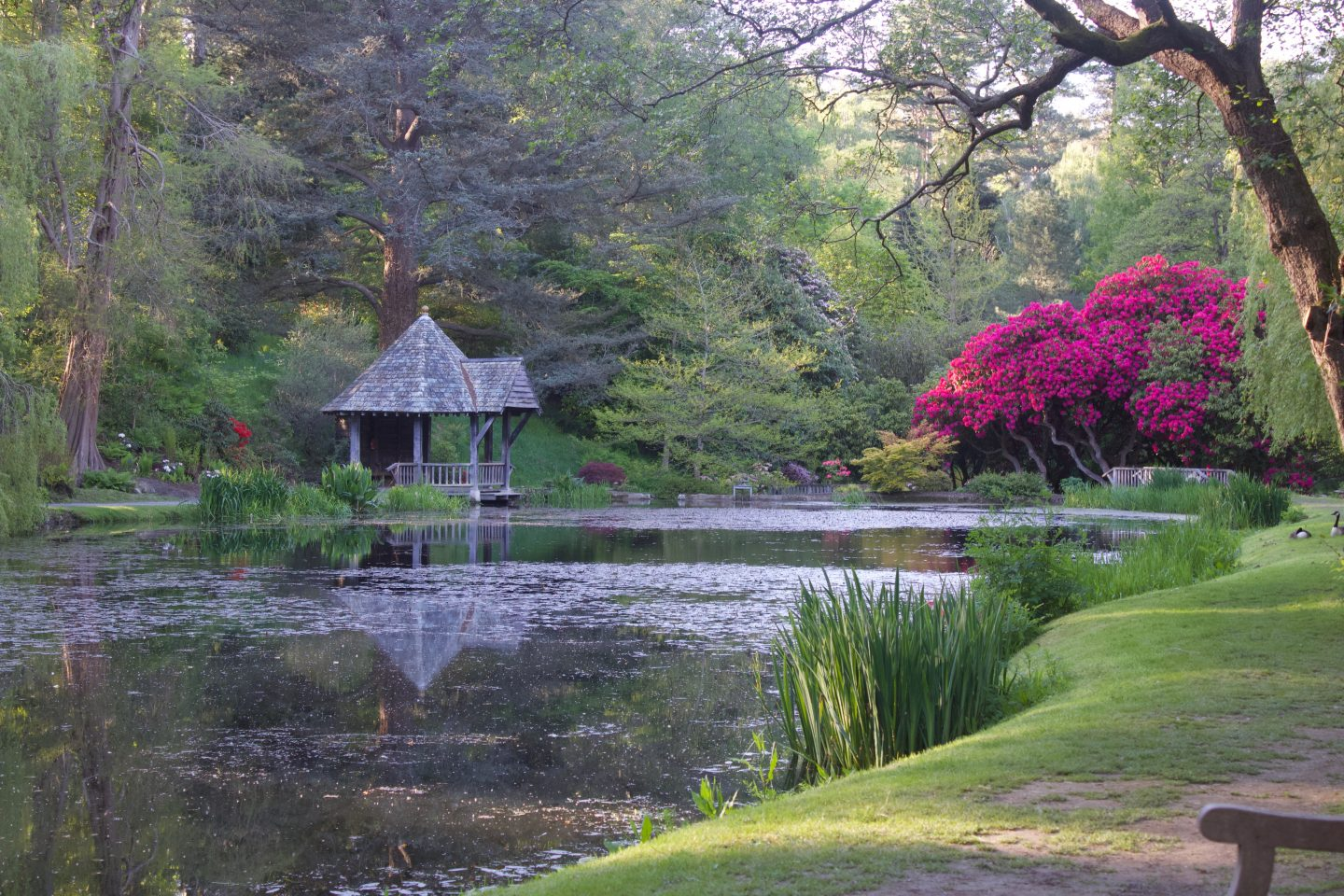 A photo of a small lake with flowers and trees all around it, some of the trees reflect on the water